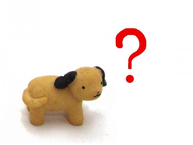 犬の年齢の数え方を調べて、人間で言うと何歳??見なきゃよかったと思った件